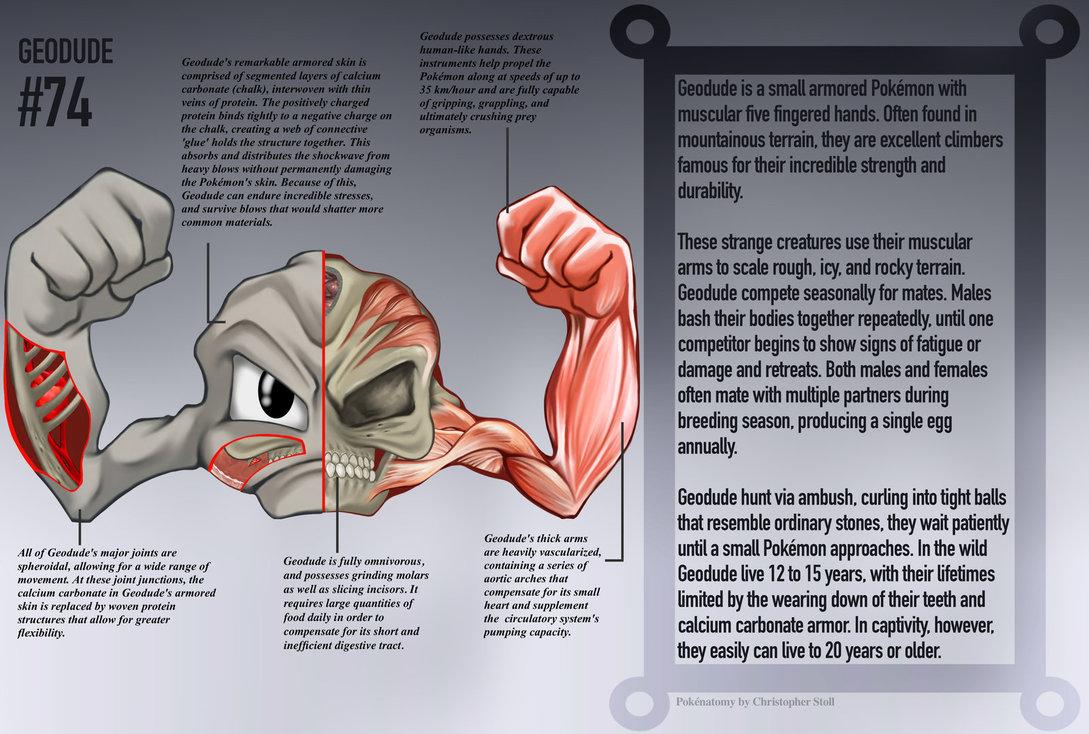PokéNatomy: an in-depth look at the anatomy of Pokémon – Pokemon Go Tips